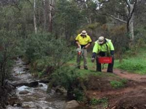 Property Services enjoy picturesque canvas for native plant-out