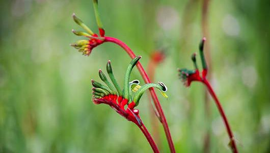 Your guide to fire resistant plants