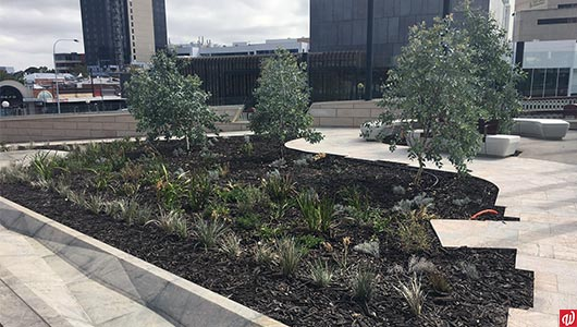 Project: Yagan Square native landscaping