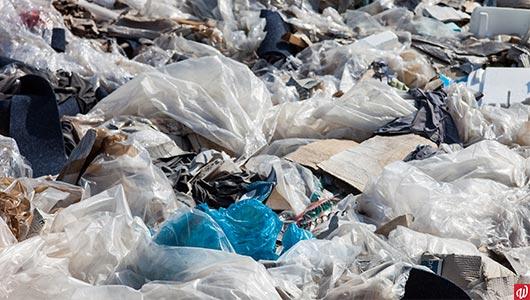 Life after the plastic bag ban