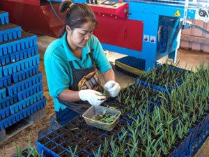 Snapshot into Social Enterprise: Wholesale Nursery