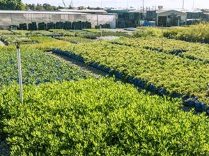 July Wholesale Nursery specials now available