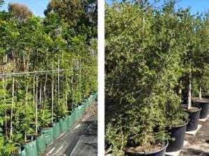 EOY sale on premium advanced trees!