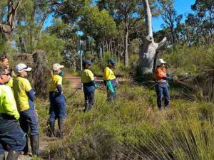 WA at threat from dieback infection