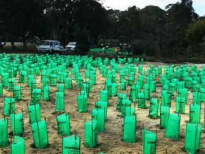 Property restores endangered Banksia woodlands